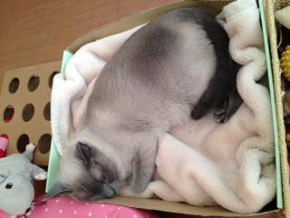 猫カフェ2.JPG